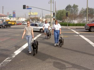 Guide Dog Trainers