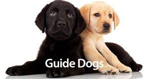 GuideDogs