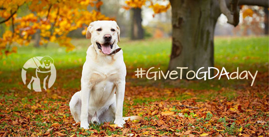 Make a Giving Tuesday Donation to Guide Dogs of America