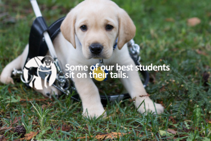 Make a Difference with Guide Dogs of America