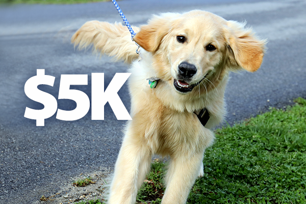 GST Department Raises Heartbeats, Funds with 5K for Guide Dogs