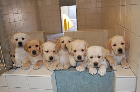 CW Network Does 'Good' for Guide Dogs of America