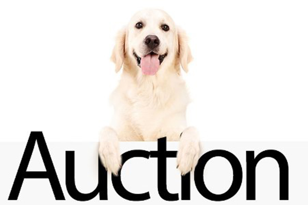 Let the Bidding Begin in the Guide Dogs of America Online Auction