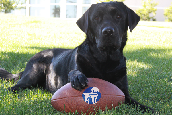 Are You Ready for Some Football? It's Game Time for Guide Dogs of America!