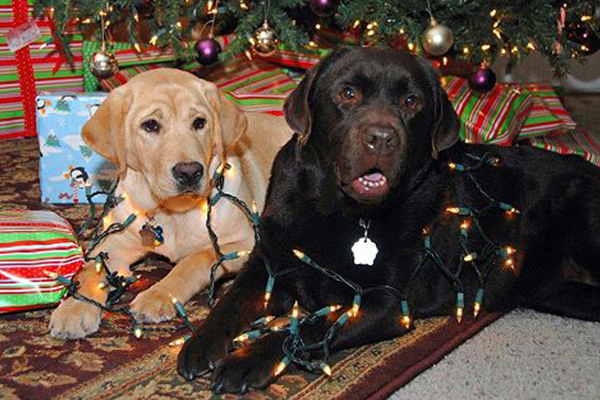 We're Giving to Guide Dogs Today