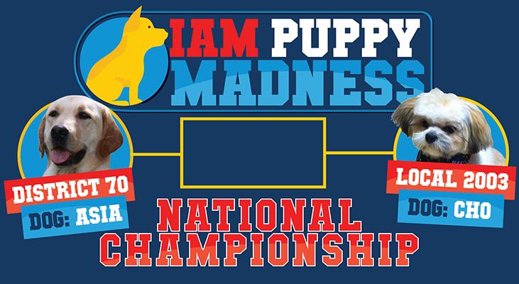 IAM Puppy Madness is Down to the Buzzer