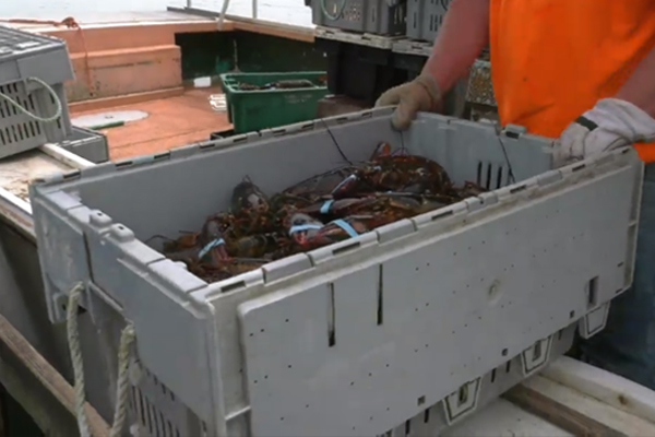 IAM CREST Receives $75K Grant for Lobstermen Safety Training