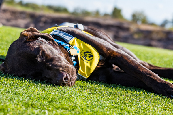 Guide Dogs of America Holds Its Charity Weekend in Las Vegas