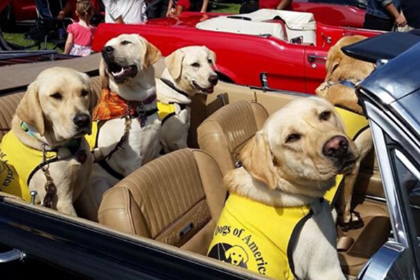 Help Guide Dogs of America in District 160's Virtual 'Run for the Dogs'