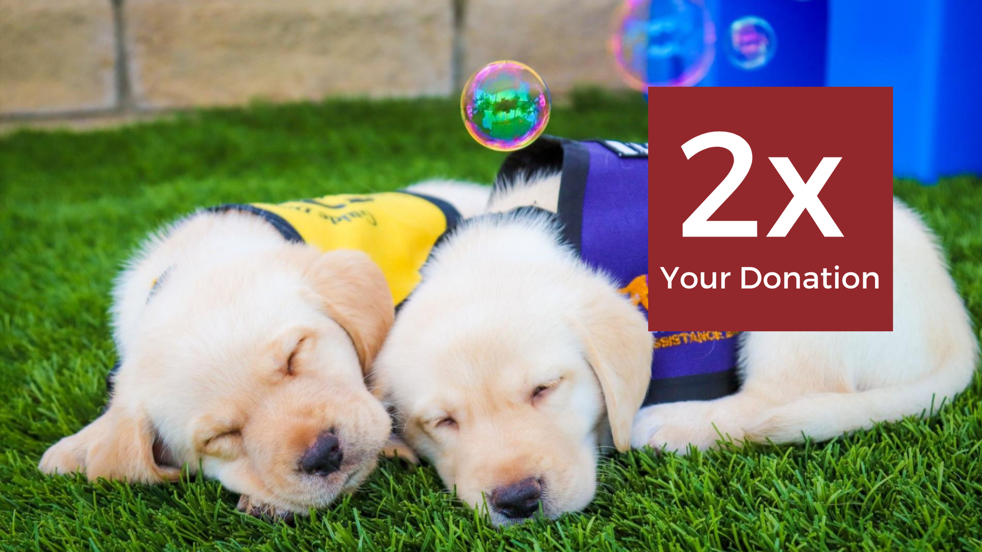 Double the Impact of your Guide Dogs Donation this Holiday Season